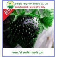 China Sweet Black Strawberry Seeds For DIY Home Garden wholesale