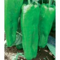 Buy cheap Bell pepper seeds-First 401 from wholesalers