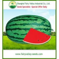 Buy cheap Sweet Green Peel Oval Shape Red Watermelon seeds from wholesalers