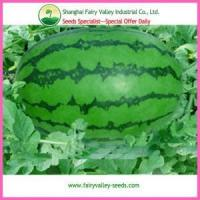 Buy cheap High Yield Green Peel Oval Shape Red Seedless Watermelon seeds from wholesalers