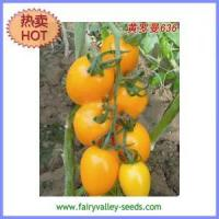 Buy cheap Egg-shaped yellow fruit tomato seeds 120-130g- yellow Roman 636 from wholesalers