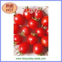 Buy cheap Multicolor tomato seeds - multicolor red early mature 35g from wholesalers