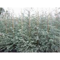 China Trees and Bushes on sale