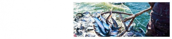 Seine fishing nets images for Commercial fishing nets for sale