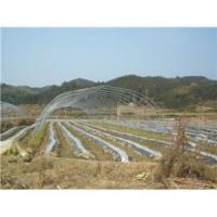 China Galvanized Polytunnels Plastic Greenhouses wholesale
