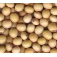 China Soyabean on sale