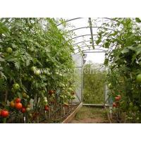 China Commercial Greenhouse Tomato Greenhouse wholesale