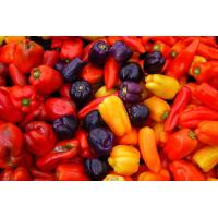Quality Natural food color Capsicum for sale