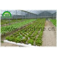 China NFT Hydroponic wholesale