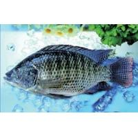Buy cheap Frozen Tilapia Whole-round Tilapia Whole-Gutted Scaled from wholesalers