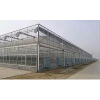 Hot Sale Agricultural/Commercial Plastic Greenhouse