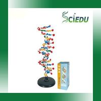 Buy cheap SC3212DNA Structure from wholesalers