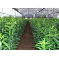 China Portable Uv Resistant Clear Plastic Roll Film UVA Diffuse For Greenhouse on sale