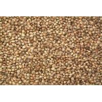 China Hemp Seed wholesale