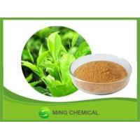 China Organic Approved Natral Green Tea Extract Weight Loss on sale