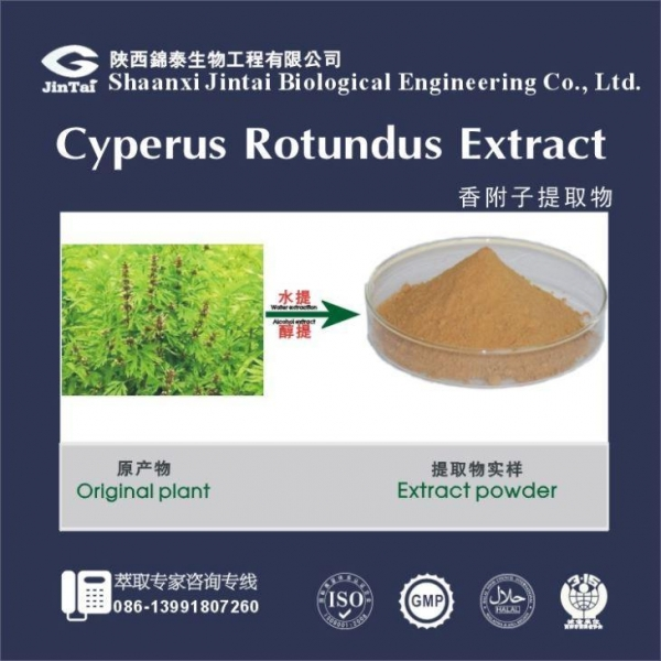China 2016 Nutgrass powder,Rhizoma Cyperi powder extract /Cyperus rotundus extract