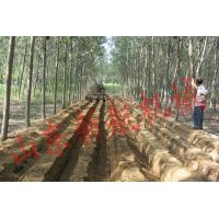 China Ditcher for green Chinese onio... Number: 31010 wholesale