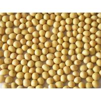 China ALLERGY FREE SOY BEAN on sale