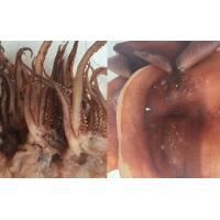 Buy cheap Product: Dried Squids from wholesalers