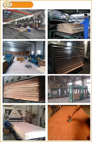 Quality OVL Plywood/Plain Plywood for sale