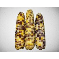 Buy cheap Dot Corn from wholesalers
