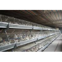 Buy cheap Chick Cage from wholesalers