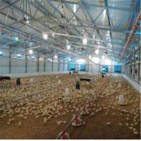China Poultry House&Chicken House&Poultry Farm Lighting Roof house wholesale
