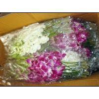 Buy cheap Fresh Orchid Flowers from wholesalers